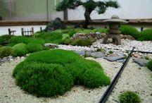UNI moss garden / 卓上苔庭