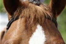 paarden / I love horses