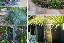Drought resistant natural gardening ideas