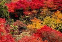 JAPAN / ONE OF THE MOST BEAUTIFUL PLACES IN THE WORLD