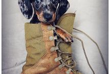 Dogs in Clogs... and other stories