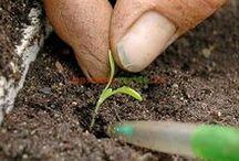 Idei pentru casă grădină