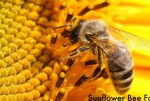 Sunflower Bees