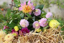 Blomster i haven / Her viser jeg billeder af havens blomster og bede.