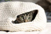 Pets / by Jessica Dorny