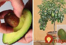 rostliny - pěstování