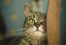 Cats, 4