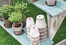 Container Gardening II / by Queen Jenevere
