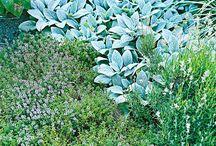Outdoor plants / by Patti Swartzel