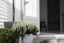 plants -interiors / terraces