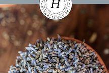 HEIRLOOM | medicinal herbs / Growing and harvesting information for heirloom and wild medicinal herbs.