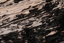 Patterns in Nature: Wood