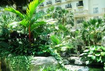 Atrium Greens / Our atrium is filled with living plants taken care of daily by our horticulture team.