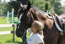 Horses / Horse crazy photos