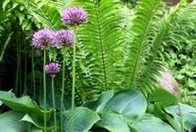 Garden - Växtkomposition.