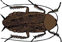 come allontanare gli scarafaggi