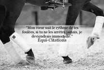 Horse citations