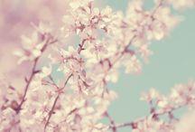 Flowers / by Morgan King