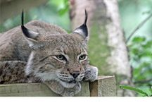 Wildlife Parks & Zoos / Wildlife Parks and Zoos in the Canterbury district / by Visit Canterbury