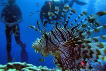 Sea / Onderwater