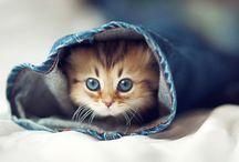 Kittens / The worlds cutest kittens
