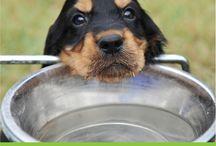 Warning! / Protecting your dog