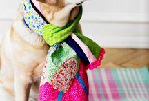 Dogs - Labrador