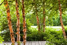 Forest gardens