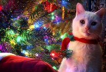 Natale e i nostri amici a quattro zampe!