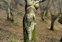 Kunst i naturen