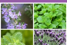 Something Interesting about Herbs / Interesting facts and information on herbs.