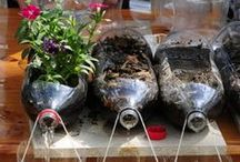 ALF plant science