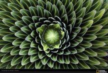 fibonacci & fractals