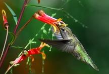 back to nature... / by Kandi Barnes
