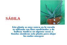 Herbario! / Las plantas de mi región se cultivan con las TIC!
