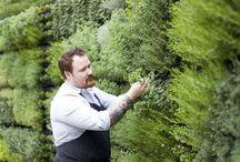 urban herb garden ideas