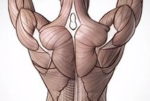 Anatomico