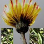 Kroedenzo (wilde kruiden en groenten) / Over wilde planten en Gebruik ervan