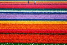 Simply colorful / by Fanny Zara