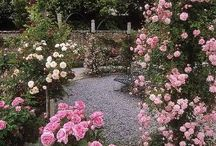 Flower Magic / Beautyful flowers and gardens. Nature and harmony. Amazing colours.