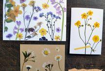 Bloemenpers voor herbarium
