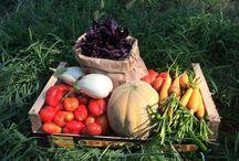 Campo Lunare Unità di Produzione Biologica / Campo Lunare Agricoltura Biologica Bio Frutta Verdura