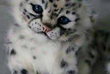 Cuteness ❤️