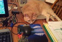 Kitty (cats) / I love my Kitty / by AnimatedFaith