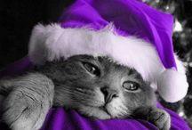 Cats / by Rachel Cox