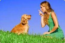 Dog Training Guide / Daniel Stevens guide to dog training