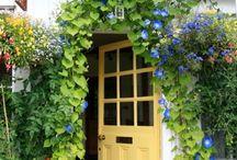 My new front door ideas