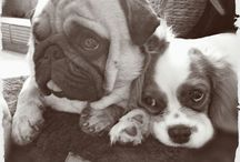 Percy&Fibi