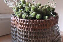 Potted plants / by Carol Trujillo