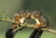 Squirrel-Fu / Professional squirrel stalker with a platinum belt in squirrelati and master of the squirrel-fu.